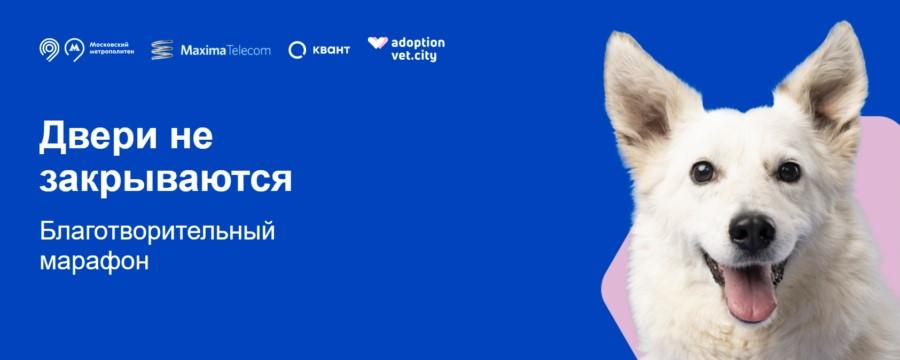 Реклама в метро помогла животным из московского приюта обрести хозяев